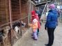Экскурсия в приют для собак